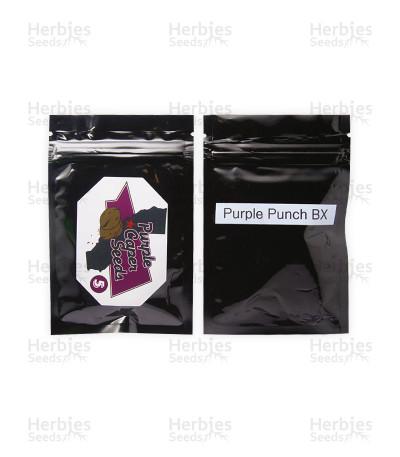Purple Punch BX regular