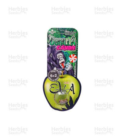 Gorilla Candy (Eva Seeds)