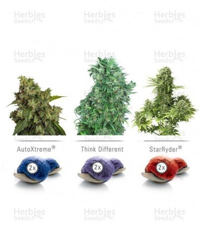 Buy Colour mix 7 (AutoFem) seeds