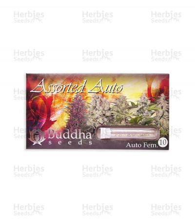 Buy Buddha Assorted Auto Seed Mix